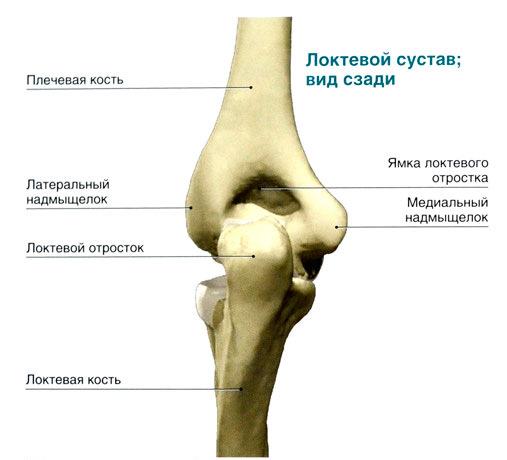 Как выпрямить локтевой сустав как вылечить хондроз плечевого сустава