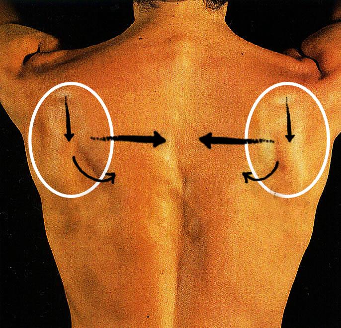 нейтральная позиция лопаток в пилатес и йоге
