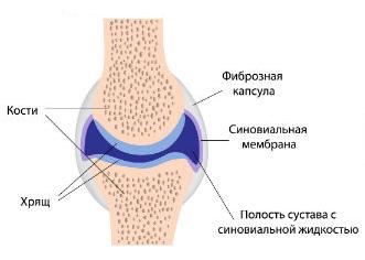 Синовиальная оболочка колена