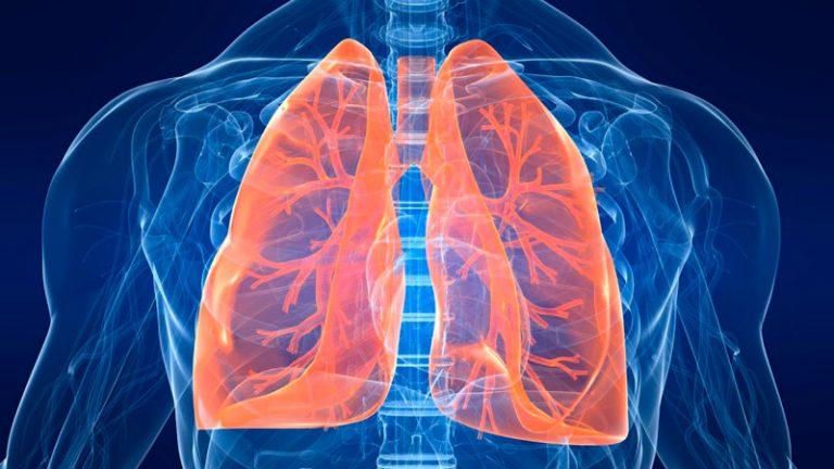 Пранаяма: что нужно знать о дыхательной системе
